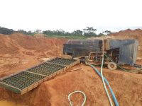 MAB045 Gold Plant